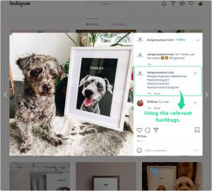 Designer Pet Portraits on Instagram